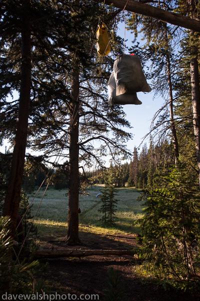 Avoiding bears in Yellowstone