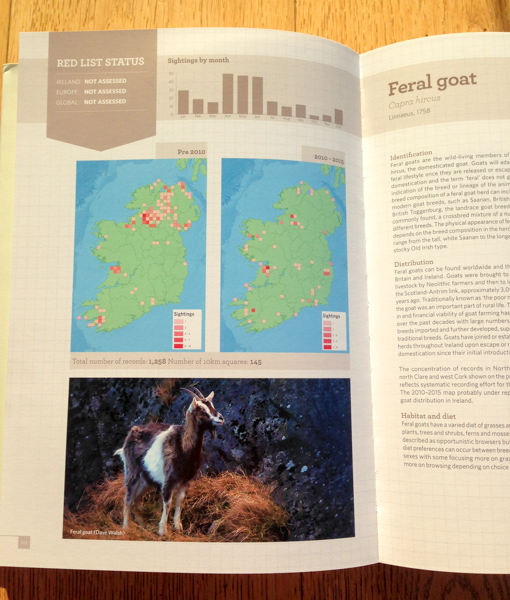 Feral Goat photo by Dave Walsh in Atlas of Mammals in Ireland