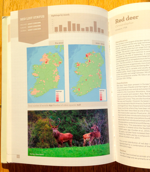 Red deer in Atlas of Mammals in Ireland photograph by Dave Walsh