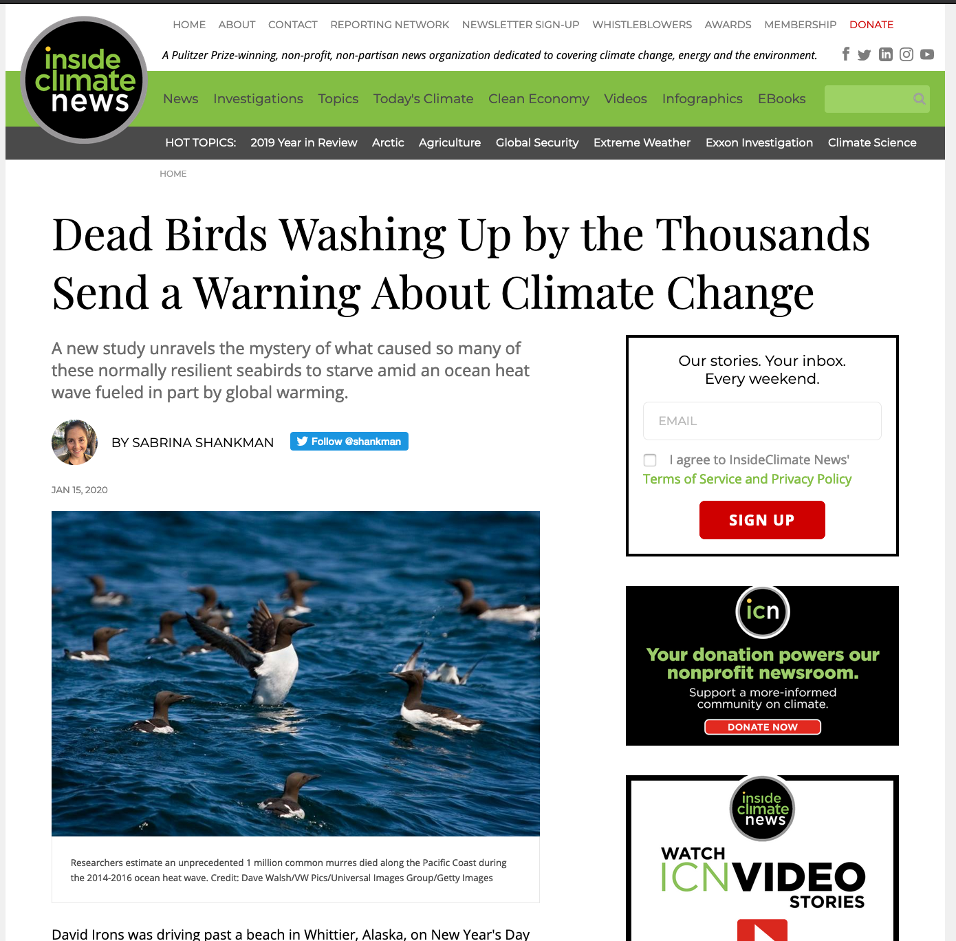 Dead Birds Washing Up by the Thousands Send a Warning About Climate Change