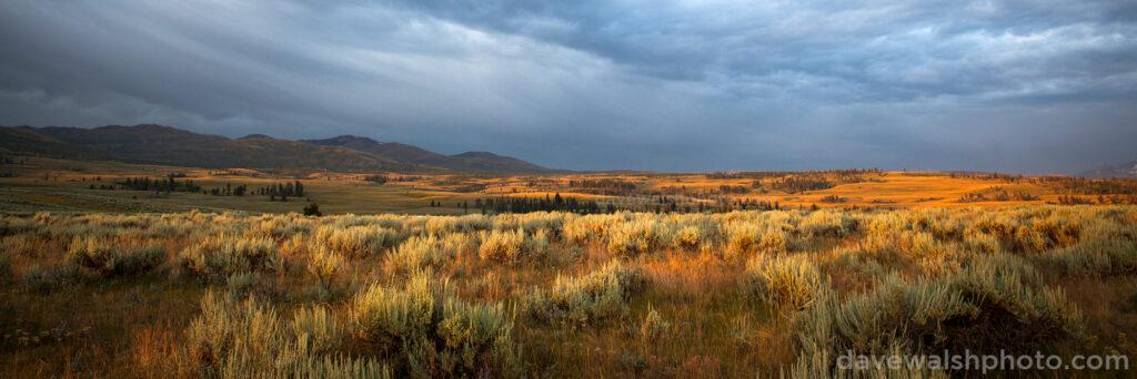 Sunrise over Sagebrush, Yellowstone
